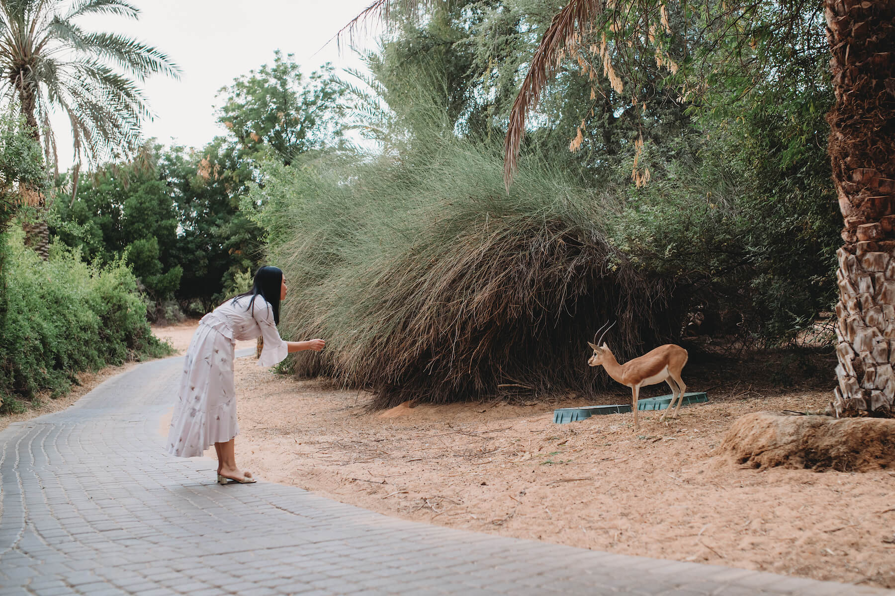 A women trying to get an animals attention in the Dubai desert in Dubai, United Arab Emirates