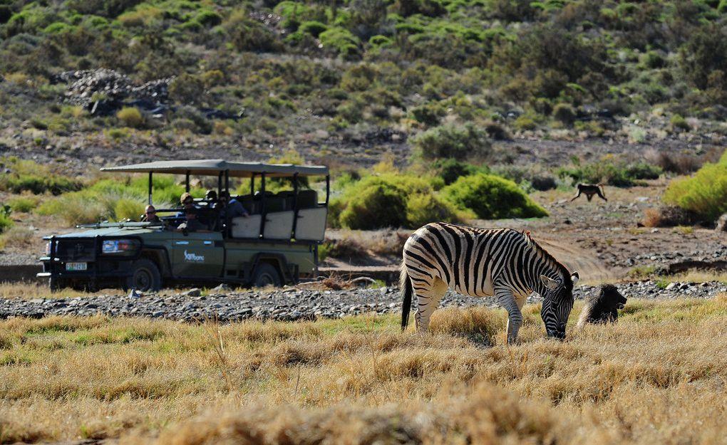 A scene from a three-hour game drive at Sanbona Wildlife Reserve. (Photo: Courtesy Sanbona Wildlife Reserve / sanbona.com)