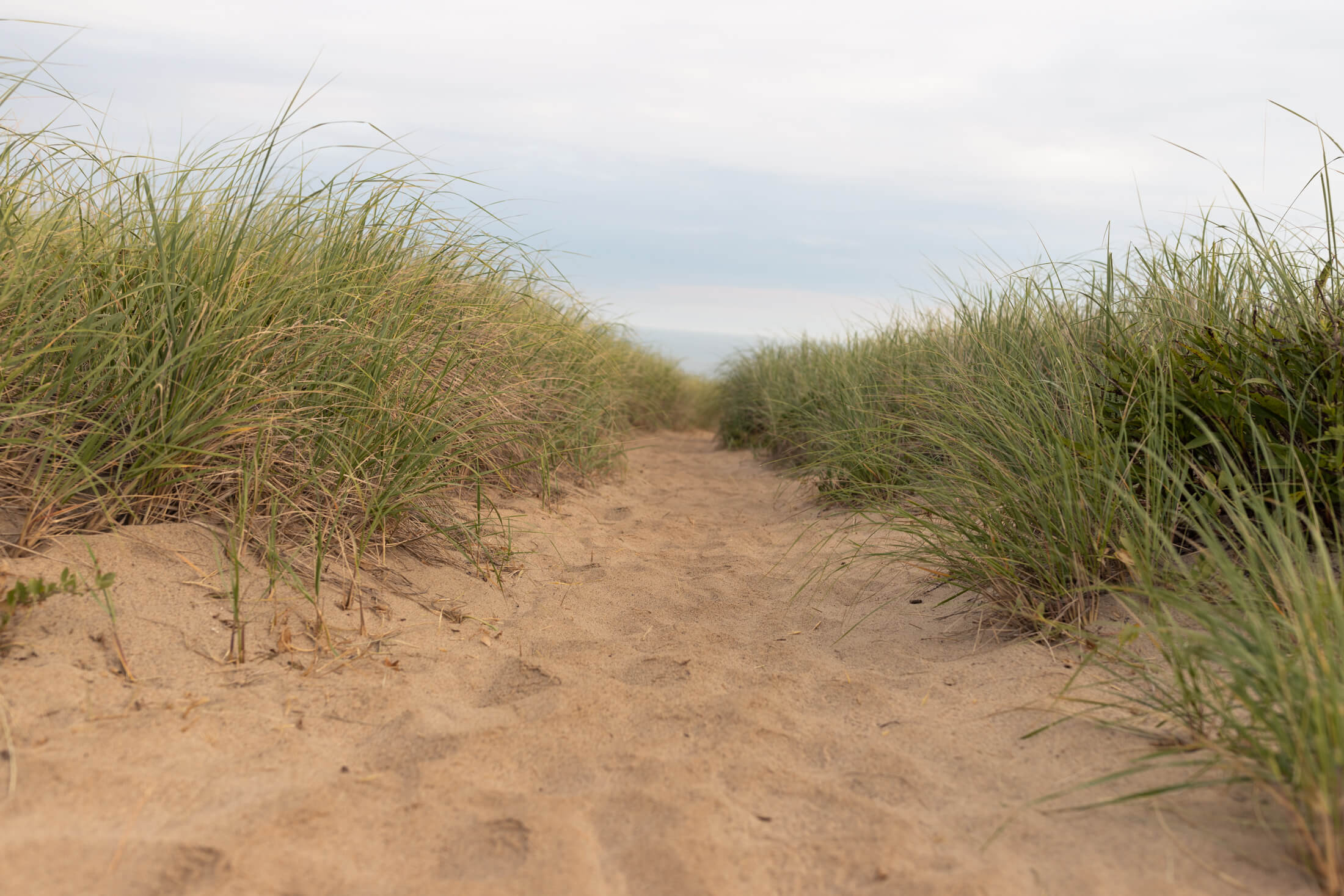 Sandy beach in Cape Cod, Massachusetts, USA.