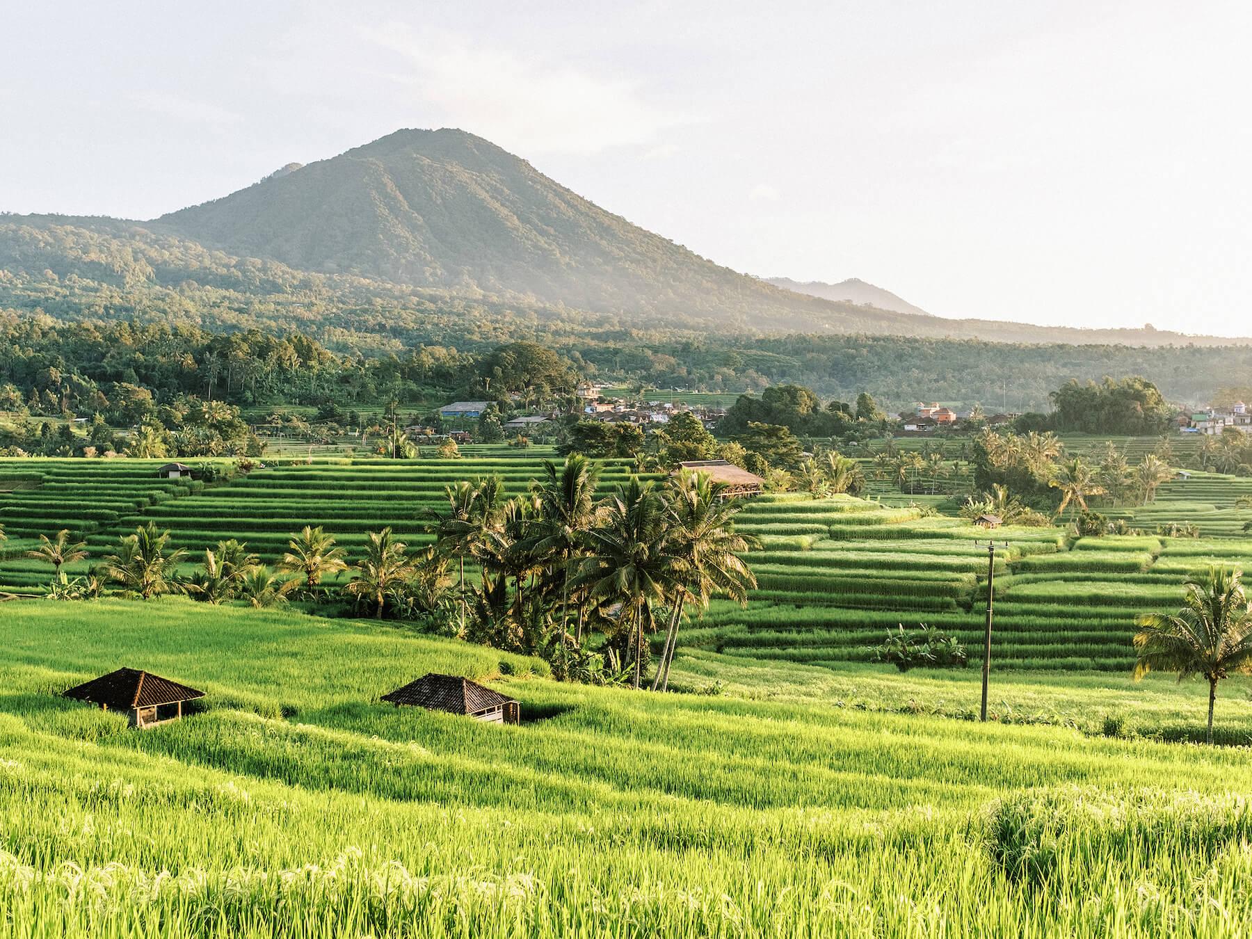 Travel home decor, fine art print of Bali Jatiluwih in Bali, Indonesia