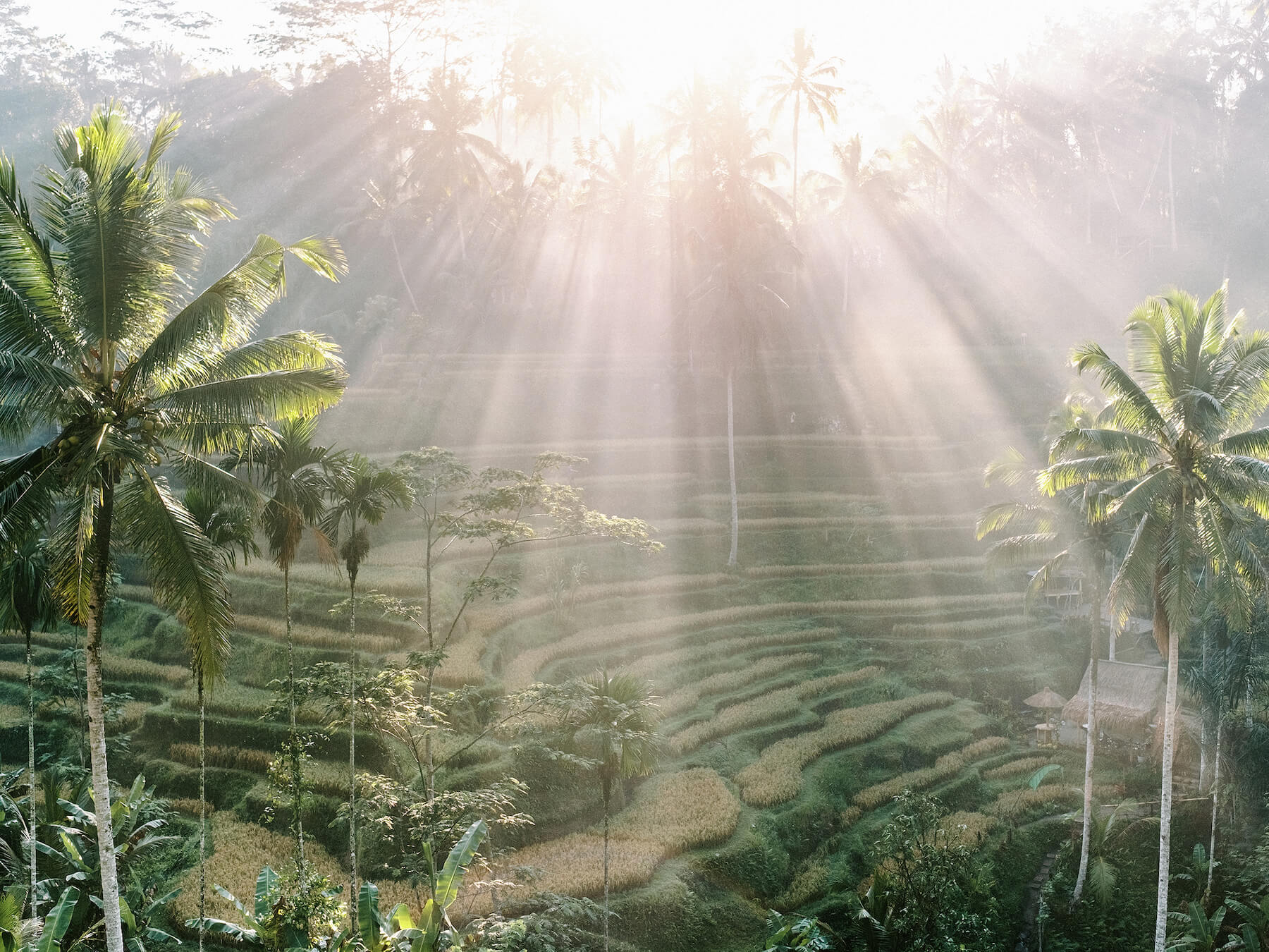 Travel home decor, fine art print of the Tegallalang Rice Terrace in Bali, Indonesia